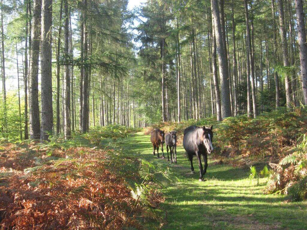 new forest hampshirre