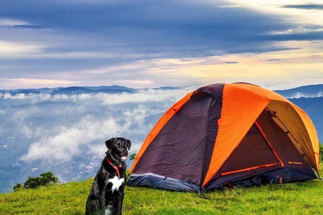 pet friendly campsites